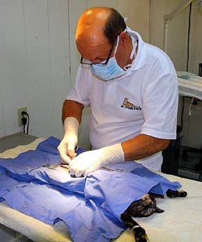 Dr. Vladmir performing surgery